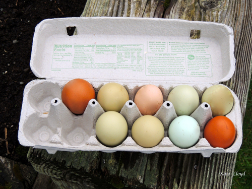 Dozen-Eggs
