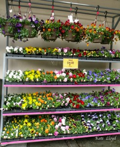 This bounteous stand of flowers is tempting to me!