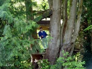 Tree-House