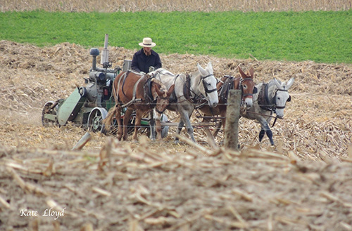 Amish Farmer in Lancaster County
