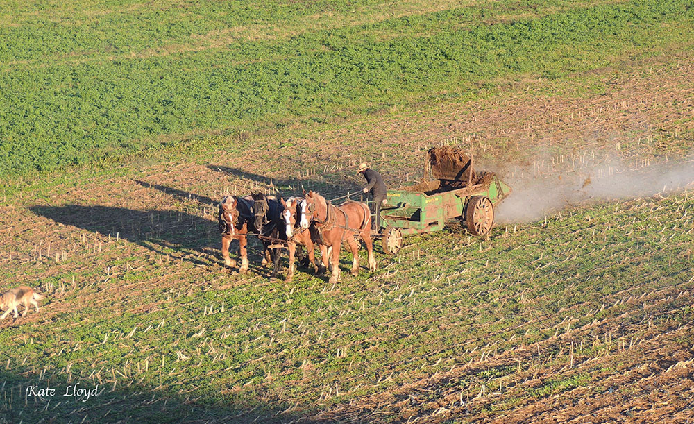 Amish Farmer in Lancaster County, PA.