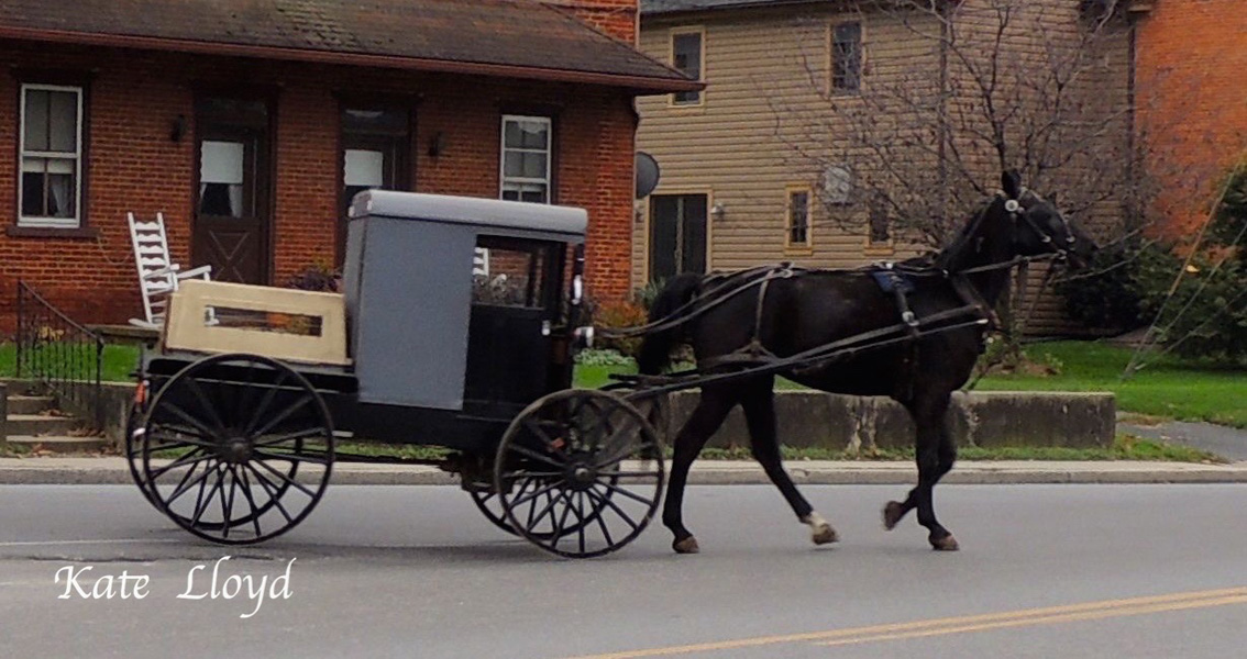 Amish Horse & Buggy in Lancaster County, PA. Is there a dog in that crate?