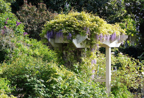 Love this arbor cloaked in Wisteria.