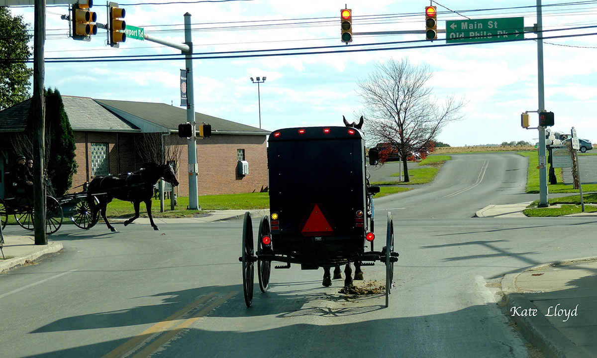 The Amish horse-and-buggies have to deal with traffic too!