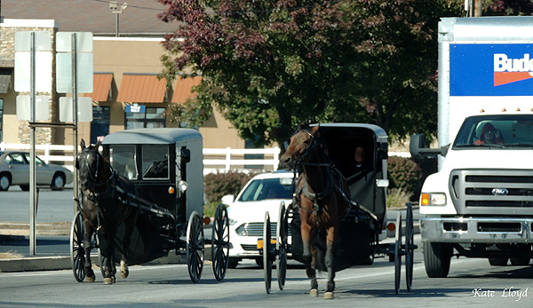 Should Amish buggies or vehicles have the right-of-way in Lancaster County?
