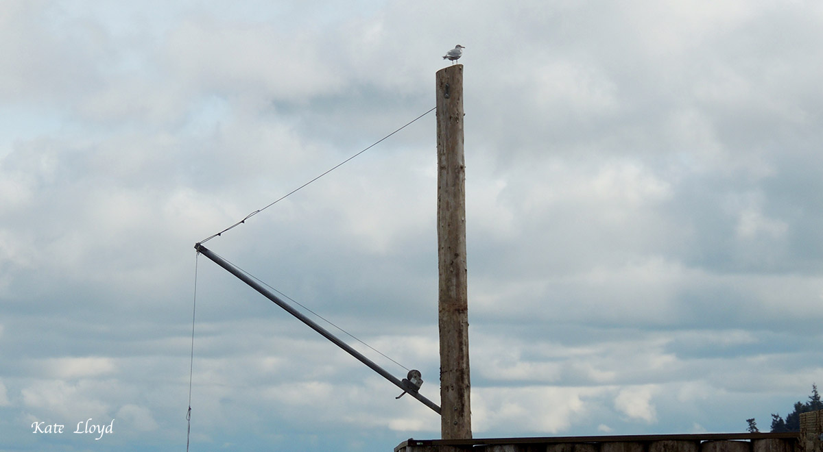 A seagull claimed our neighbor's Gin Pole, used for lowering small boats into the water.