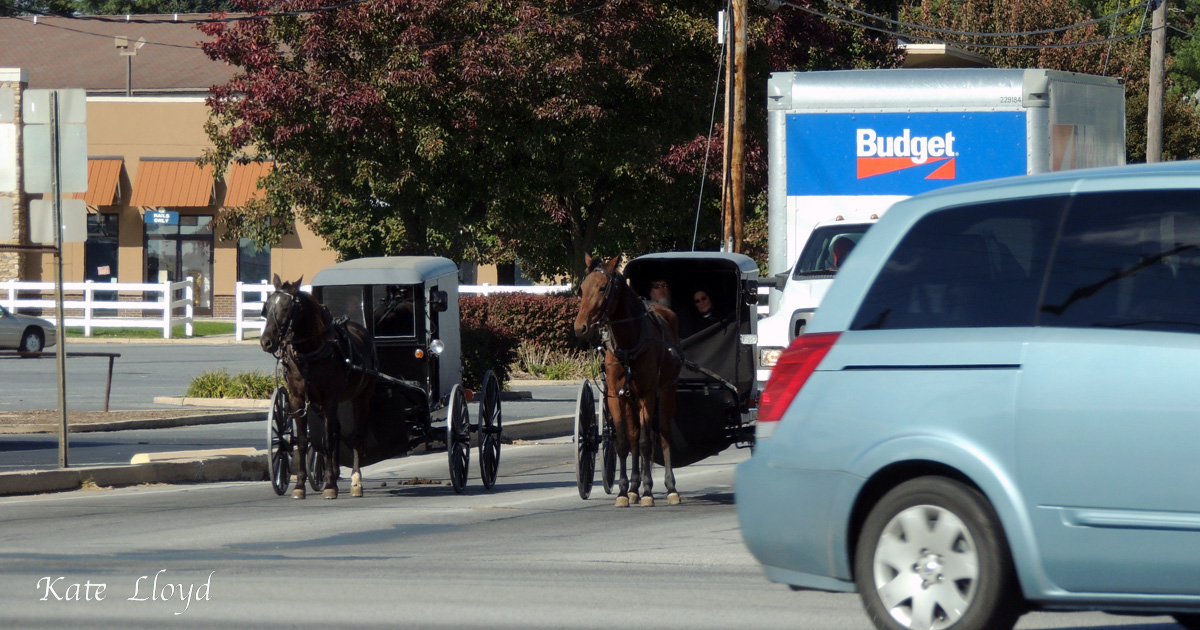 Do you think Old Order Amish driving buggies get stressed in traffic jams?