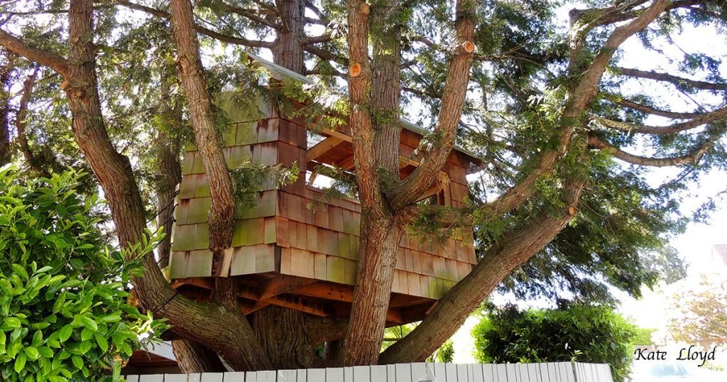 Had I just never looked up before to see this fun treehouse?