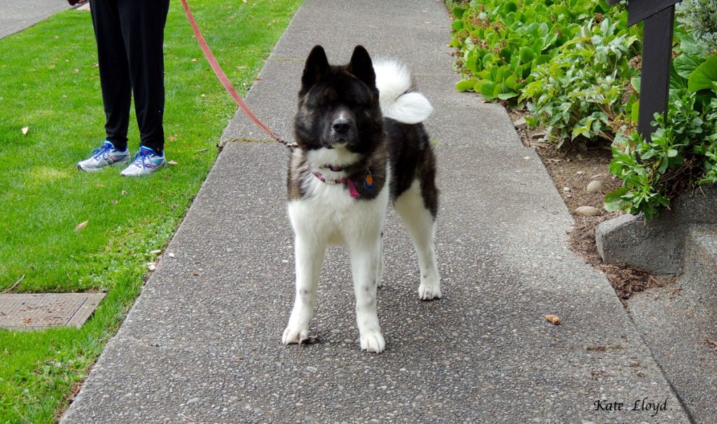Walking your dog is a great way to meet people if your pet is friendly.