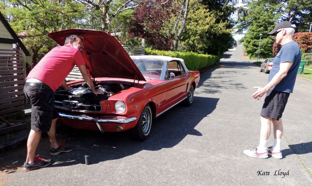 This 19641/2 Mustang reminded me of Holly's car in _Forever Amish_! I suspect my husband enjoyed talking about it more than gardening.