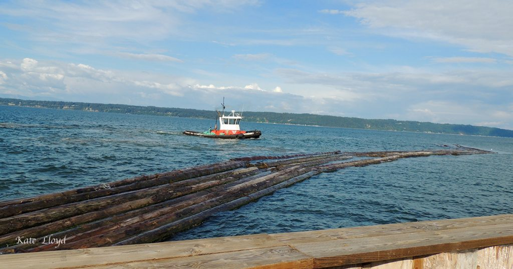 Tug nudging logs to the shoreline to be tied. Over 300' long and six logs wide!
