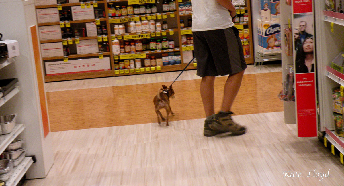 Is bringing your rambunctious dog into a drugstore over the top?