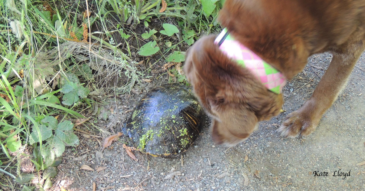 13-year-old Sally investigating a turtle.