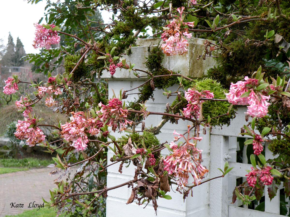 These fragrant blossoms emit a heavenly fragrance.