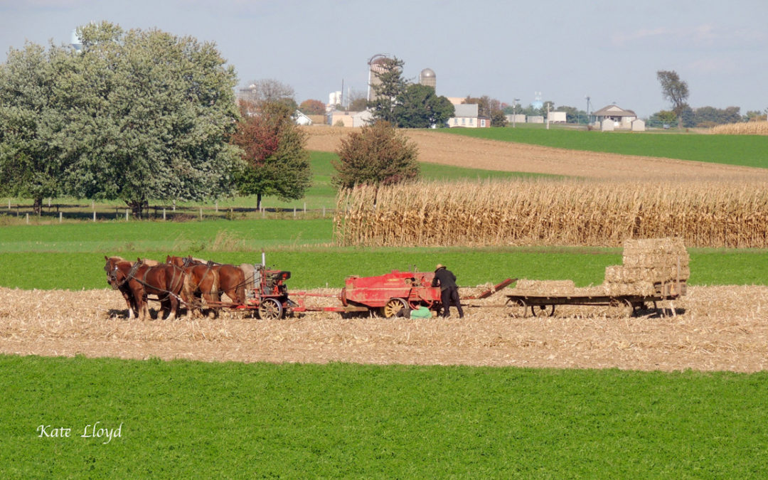 Amish Autumn