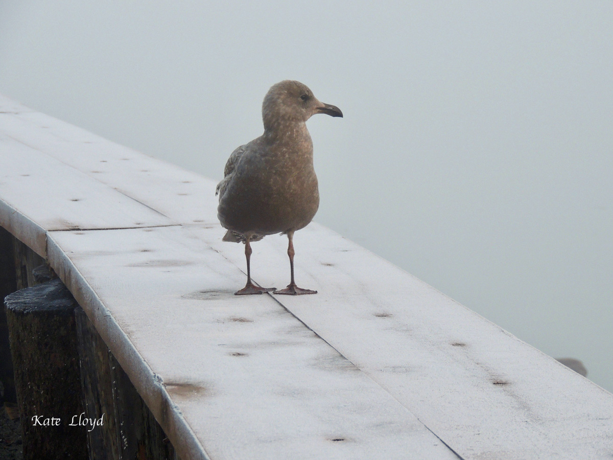 A solitary sea gull waited for sunrise on the icy bulkhead. Brrr!