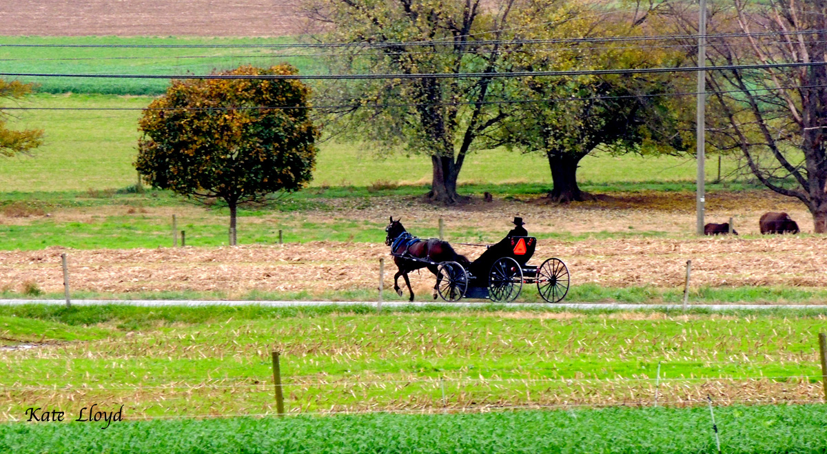 A young Amish man driving home from church service in Lancaster County.