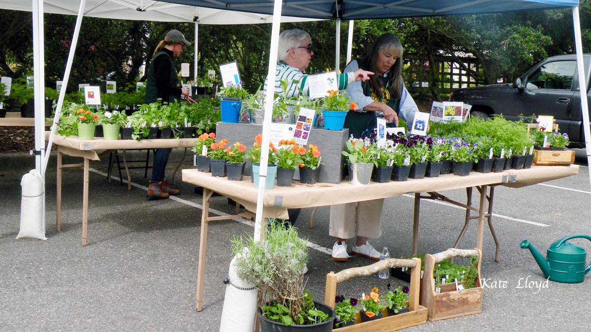 Gardening groups meet monthly and put on annual flower sales. Fun!