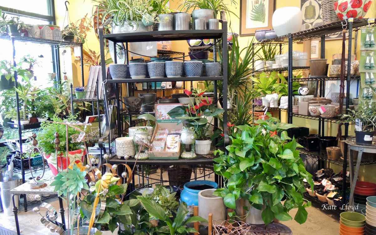 Indoor plants are hard to resist.