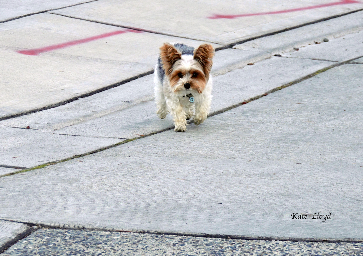 When I met this little pooch, I was afraid it was lost. But thankfully its owner appeared.
