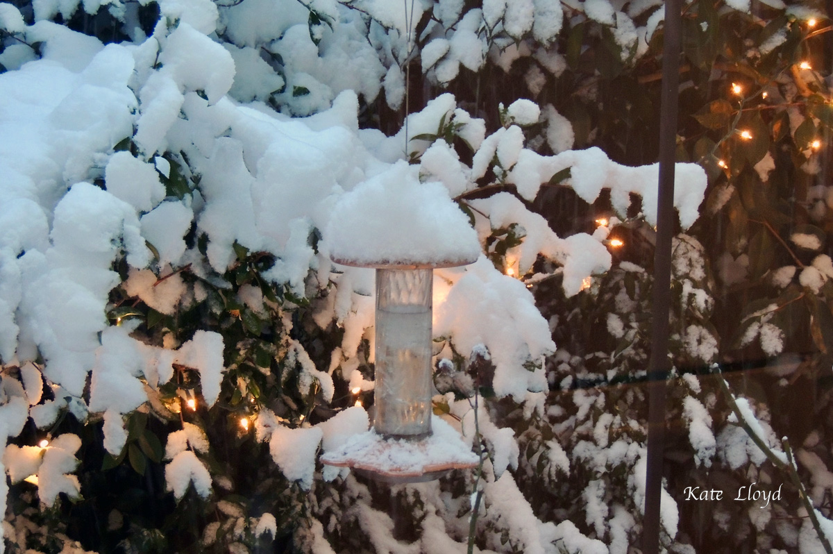 Oops, I forgot to bring the hummingbird feeder in for the night.