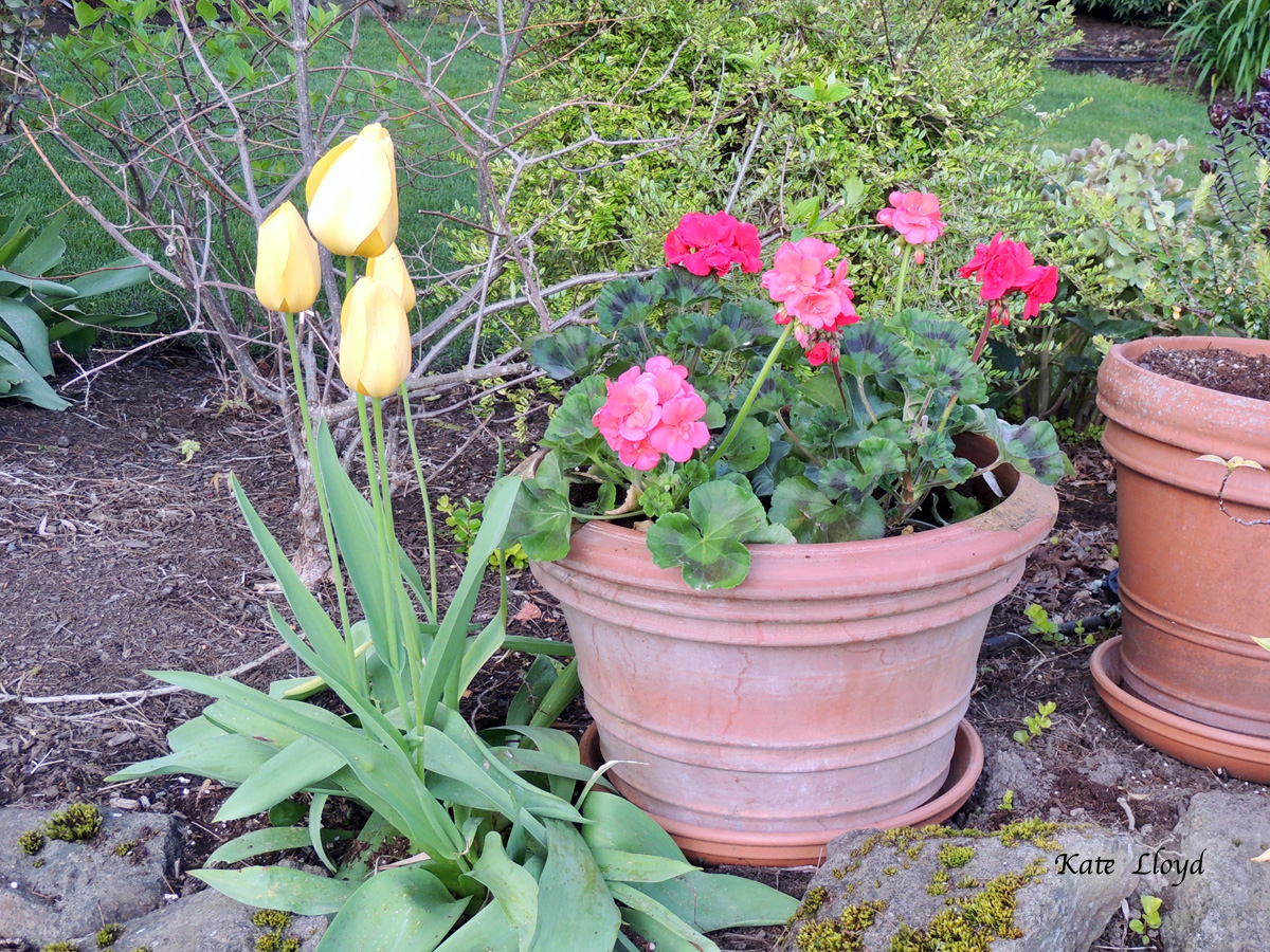 Pots are the way to go in little yards!