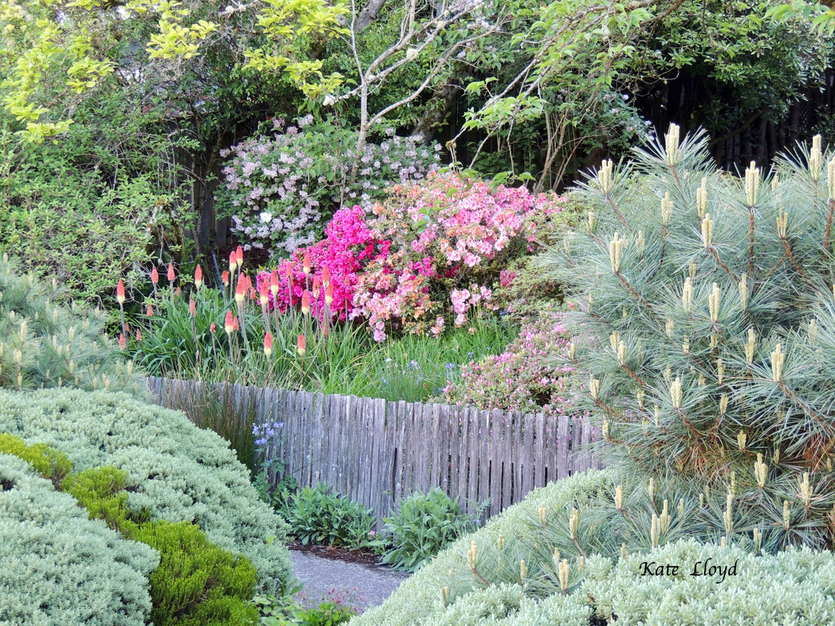 A delightful planting that flourishes in the spring.