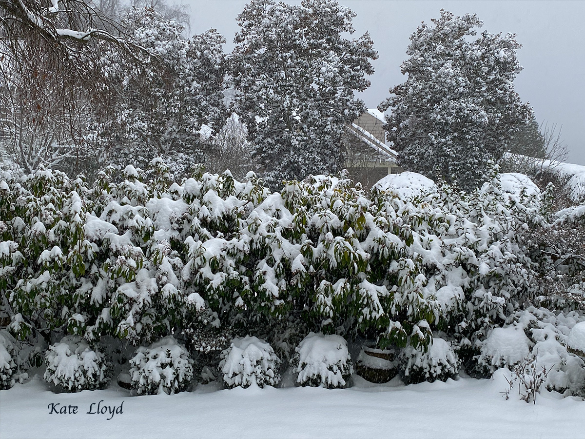Coffee mug in hand, I admired the snow falling in our front yard.