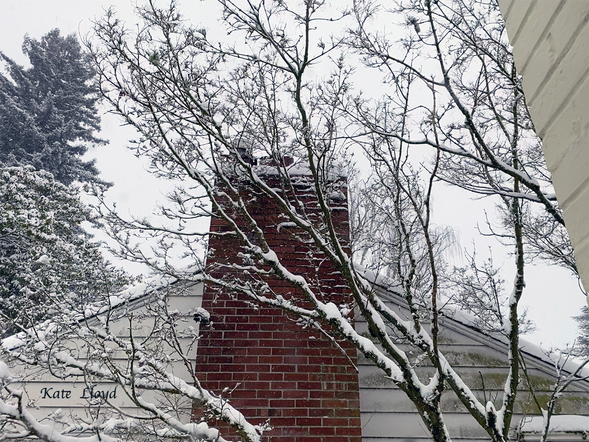 Even our next door neighbor's maple and chimney looked more beautiful!