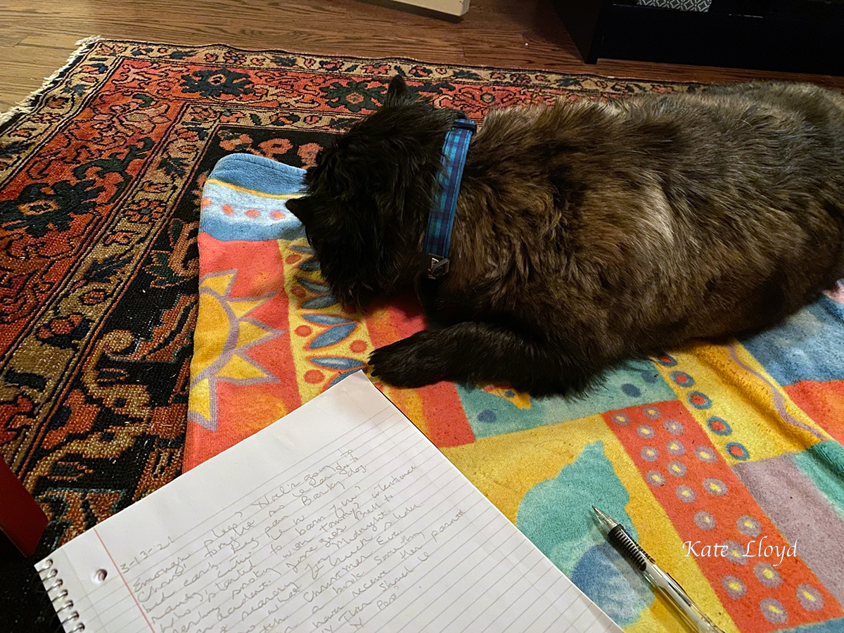 Piper settles down for a nap on her favorite beach towel, while I get back to writing.
